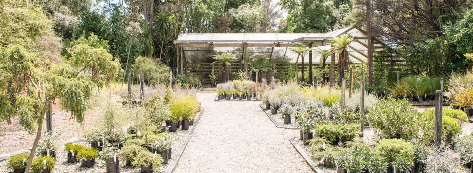 Nikau Gardens, Nelson's best native plant nursery